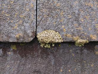 横浜市磯子区磯子にてスレート屋根の点検調査、スレート屋根は塗膜によって防水機能を保っているため10年前後で塗り替えが必要です