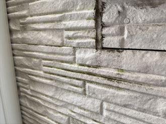 川崎市川崎区渡田にてサイディング外壁の調査 外壁には小さなクラックや汚れの付着、藻の繁殖がありました