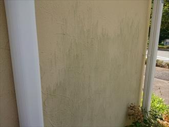 日が当たりにくい北面外壁には多くの苔の発生が見受けられます