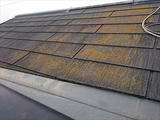 コケの付着した屋根