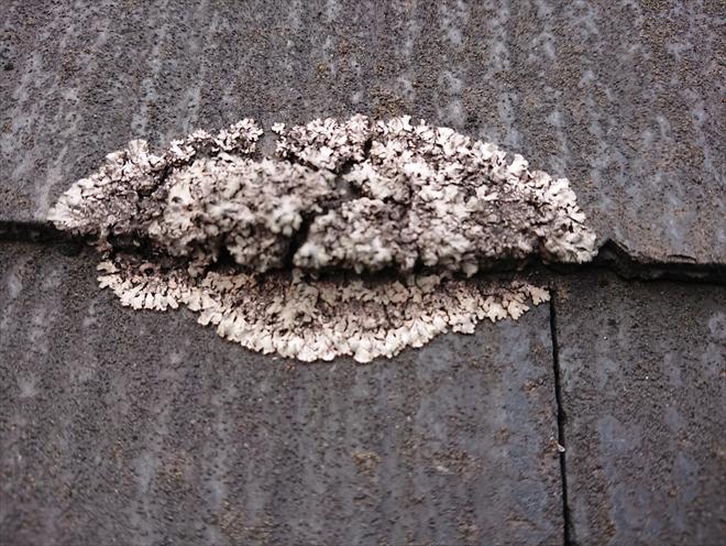 横浜市中区で築17年の化粧スレート屋根を点検、北面は苔や藻で汚れていました