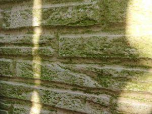 外壁に苔が生えている