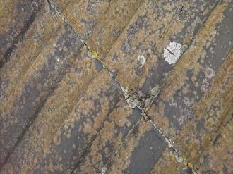 モニエル瓦の苔、カビ
