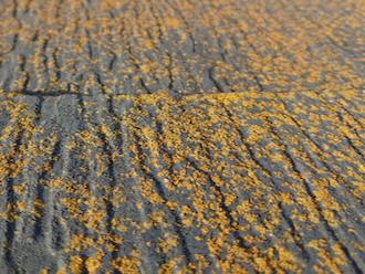相模原市南区麻溝台にて、お住まいの苔やクラック(ひび割れ)は塗料の劣化が原因で起こります