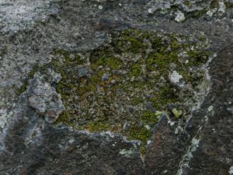 外壁に付着した苔や藻
