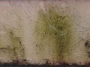 苔が生えた壁