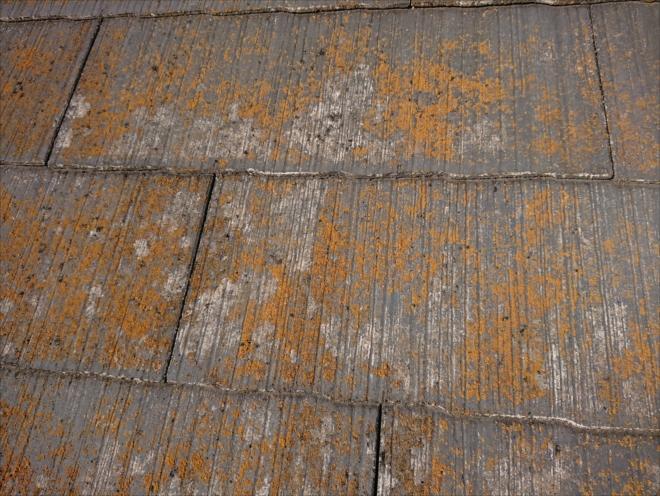 横浜市旭区鶴ヶ峰本町で築20年経過し屋根が黄色く見えるほど苔や藻が付着していても屋根塗装工事は可能です