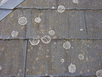 横浜市緑区上山で調査したアスベスト入り化粧スレートは苔やカビが多く屋根塗装工事で保護する必要性がございました