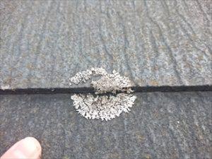 屋根表面にカビの繁殖