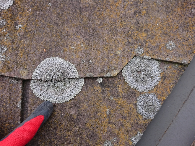スレート屋根のカビや苔の付着