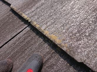 横浜市戸塚区柏尾町にてスレート屋根調査、築10年未満でも立地や環境によりスレート屋根は思っていらっしゃる以上に汚れている場合もありますので塗装でのメンテナンスが必要です