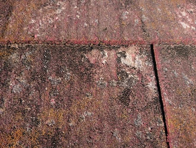 特にカビが多いのは小口と呼ばれる屋根材の重なり部分に多く見受けられました。