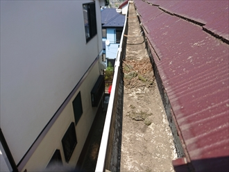 軒樋の内部には草木が溜まっています