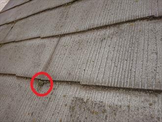 横浜市瀬谷区三ツ境にて、苔が多く繁殖した屋根に塗装でのメンテナンスをご提案