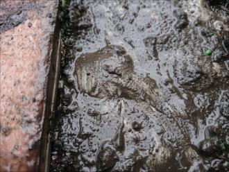 膨らみが複数防水層が傷んでいる可能性があり