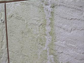 緑色に苔がはっきりと付着しているのが分かる外壁の様子