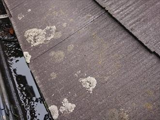 横浜市緑区三保町にて築20近くノーメンテナンスのスレート屋根調査、黒カビに覆われてスレートが傷む前に塗装でのメンテナンスをしましょう