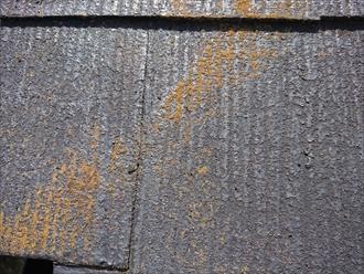 はっ水効果をなくしてしまったスレート屋根には苔の付着が目立ちます。