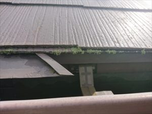 軒先には大量の藻が発生