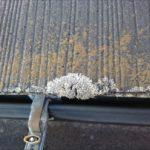 屋根に上がる時に目に入る苔やカビの繁殖