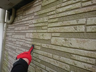 横浜市戸塚区名瀬町にて窯業系サイディングの外壁調査、日当たりの悪い北面に外壁が緑色に見えてしまう程に多く藻が生えており塗装でのメンテナンスが必要です