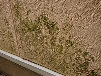 横浜市瀬谷区下瀬谷にて外壁に苔多く生え緑色に見えたりチョーキングが起きている時は塗装でのメンテナンスが必要です