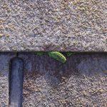 屋根材が重なる小口にも苔が生えています