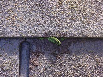 横浜市港北区篠原北にて築15年経過し屋根の塗装工事を検討、防水性能が低下した化粧スレートは雨水を吸って脆くなっておりました