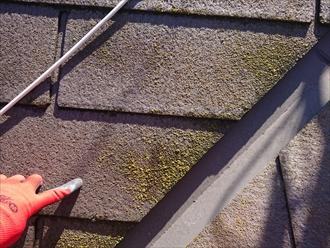 横浜市旭区万騎が原にて築16年のスレート屋根を塗装工事の為点検調査、北面に多くの苔やカビを確認