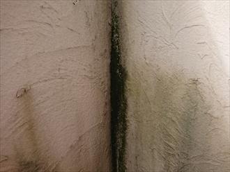 バルコニー内部の入隅には苔がびっしり