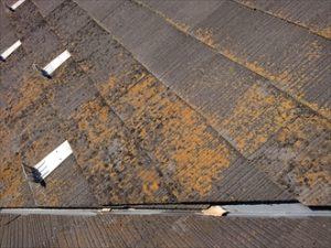 屋根が凹んでぶつかる所に設置してある谷は雨水が集まりやすい為に水はけが悪い状態になると苔や藻が繁殖しやすい