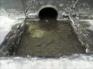 排水口廻りの状況