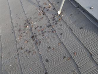 川崎市幸区 屋根塗装前点検 糞で汚れている