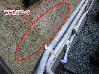 茅ヶ崎市で外壁塗装前の点検からクラックや苔の発生が見つかりました