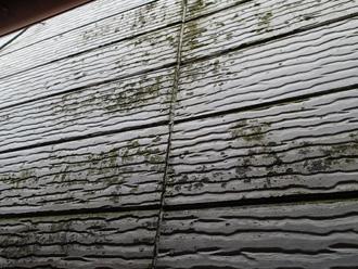 逗子市で外壁塗装・屋根塗装の点検へ、苔の発生を確認
