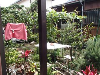 川崎市宮前区 外壁塗装前の点検 お庭には観葉植物が沢山あります