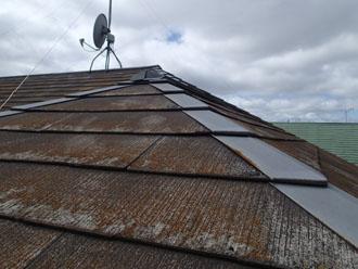 三浦市 塗装工事 点検調査 屋根の苔1
