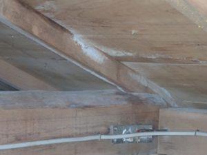 雨漏りでカビが生えてしまった小屋裏