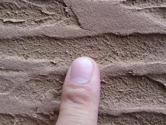 横浜市青葉区 外壁塗装前の点検 ジョリパッドの細かい目に苔が生えている