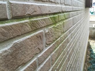 横浜市栄区元大橋にて点検調査、お住まいの大敵である苔は塗装で防ぎましょう