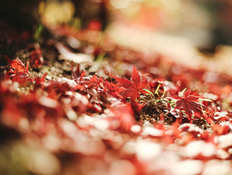 秋は外壁塗装のシーズン