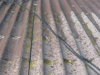 屋根に苔や藻