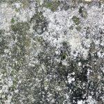 苔やカビ、藻が発生している外壁