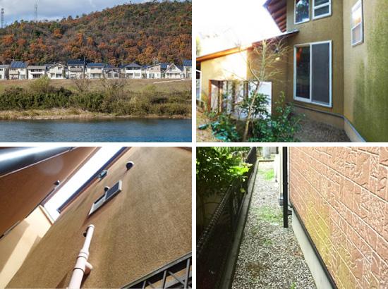 苔や藻が発生しやすい環境や立地