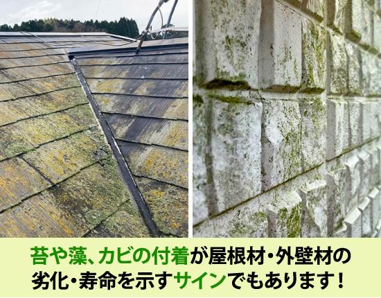 苔や藻、カビの付着が屋根材・外壁材の劣化・寿命を示すサインでもあります!