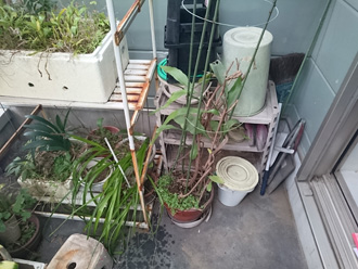 バルコニーの植物