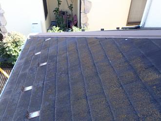 三浦郡葉山町 外壁塗装 屋根塗装 外壁点検 苔の発生